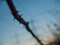Blackberry Thornes con el cielo azul en fondo Fotos de archivo libres de regalías