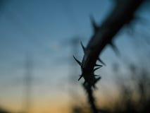 Blackberry Thornes con el cielo azul en fondo Foto de archivo libre de regalías