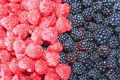 Blackberry und rote Himbeere Stockfoto