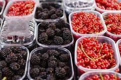 Blackberry und rote Johannisbeere in den Plastikbehältern Stockfotografie