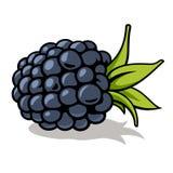 Blackberry. Vector illustration of fresh, ripe blackberry with green leaves on white stock illustration