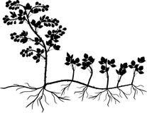 Blackberry vegetativ reproduktionsintrig royaltyfri illustrationer