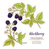 Blackberry vektoruppsättning Royaltyfri Bild