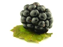 Blackberry very close Stock Image