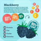 Blackberry and vitamins infographics in a flat style. Vector illustration EPS 10 Royalty Free Stock Image