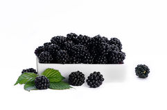 Blackberry in a white dish - white background Stock Images