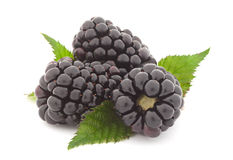 Blackberry on white Stock Images
