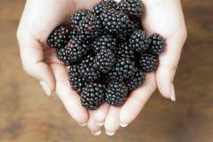 Blackberry in woman hands - healthy dessert. Blackberry in woman hands on brown background - healthy dessert Royalty Free Stock Photography