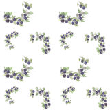 BlackBerry wreath watercolor pattern Stock Photo