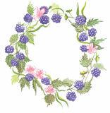 BlackBerry wreath watercolor vector Royalty Free Stock Photography