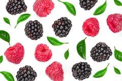 Blackberry y frambuesa con las hojas aisladas en el fondo blanco Visión superior Modelo plano de la endecha imagen de archivo