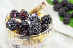 Blackberry yogurt parfait Stock Images