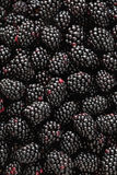 Blackberrys. Close-up photograph of fresh, ripe blackberries Stock Photo