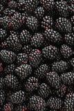 Blackberrys Stock Photo