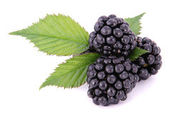 Blackberrys with Leafs Stock Photography
