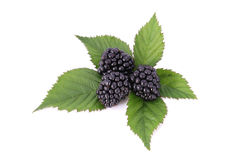 Blackberrys with Leafs Stock Photo