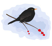 Blackbird. This Blackbird was created in Adobe Illustrator and doesn't have any gradients, meshes, compound paths or transparencies Royalty Free Stock Images