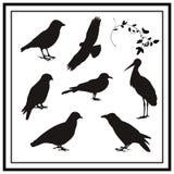 Blackbird. Vector bird silhouettes. easy to change color Stock Photos