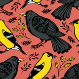 Blackbird and Goldfinch background Stock Photo