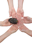 Blackbird on hands together-vertical. Many hands together: group of people joining hands to hold a small blackbird isolated on white background stock photo