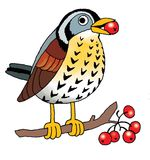 Blackbird passerine bird figure Rowan Royalty Free Stock Photo