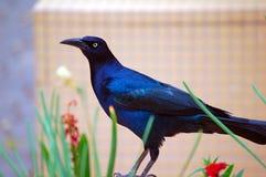 Blackbird posing. In flowers Royalty Free Stock Image