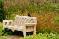 Blackbird sat on wooden bench Stock Image