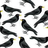 Blackbird seamless pattern. Seamless pattern with blackbirds. Vector illustration on white background vector illustration