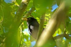 Blackbird standing on bench autumn stock photo
