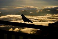 Blackbirdsilhouette Arkivfoto