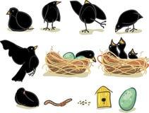 blackbirdgyckel royaltyfri fotografi