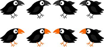 Blackbirds Royalty Free Stock Photo