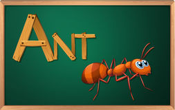 A blackboard with an ant Royalty Free Stock Photo