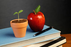 Blackboard with books,apple and plant Royalty Free Stock Images