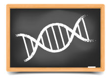 Blackboard DNA Stock Photography