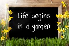 Sunny Spring Narcissus, Chalkboard, Text Life Begins In A Garden Stock Images