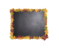 Blackboard in a frame of autumn leaves. Stock Images