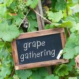 Blackboard, grape-wine Royalty Free Stock Image