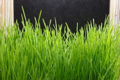 Blackboard with green grass Stock Photos