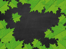 Blackboard with green maple leaves Royalty Free Stock Photos