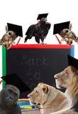 Blackboard i afrykanina zwierzęta Fotografia Royalty Free