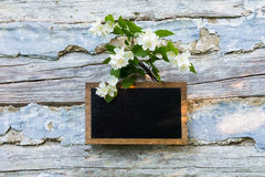 Blackboard and jasmine. On a background of old boards Stock Image