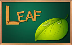 A blackboard with a leaf Stock Image