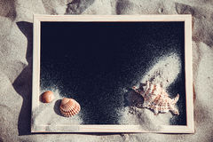 Blackboard with  shells Royalty Free Stock Image