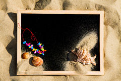 Blackboard with  shells in the sand Royalty Free Stock Images