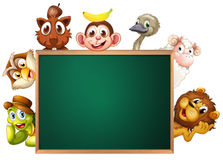 A blackboard surrounded with animals Royalty Free Stock Photos