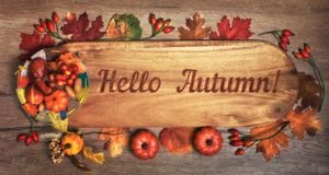 Blackboard with text `Hello Autumn`with Fall decorations. On wood. Top view, toned image royalty free stock images
