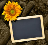 Blackboard and yellow sunflower Stock Photography