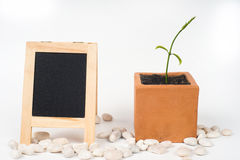 blackboard young plant in pot Stock Photos