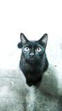 Blackcat Royalty-vrije Stock Foto's